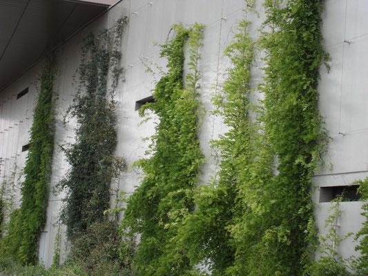 © DR Fils de fer et plantes grimpantes