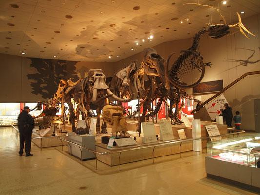 大阪市立 自然史博物館