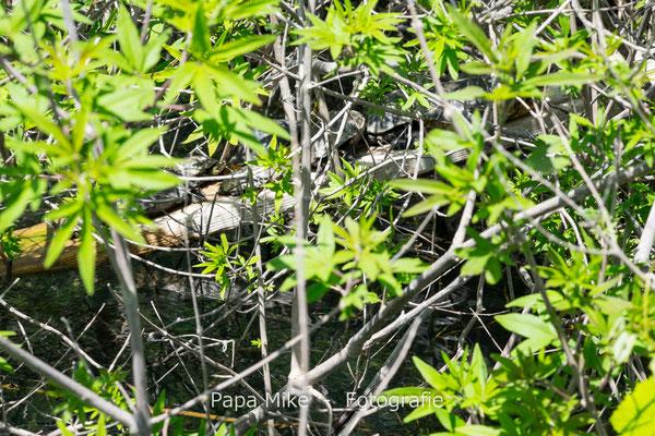 Wasserschildkröten-Versteck