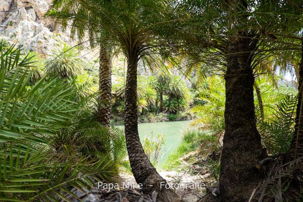 Palmenwald am Megalopotamos