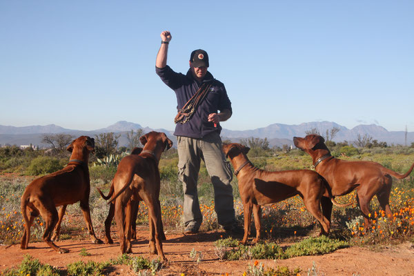Liondogs / Rhodesian Ridgebacks / Lionsriver Kennel