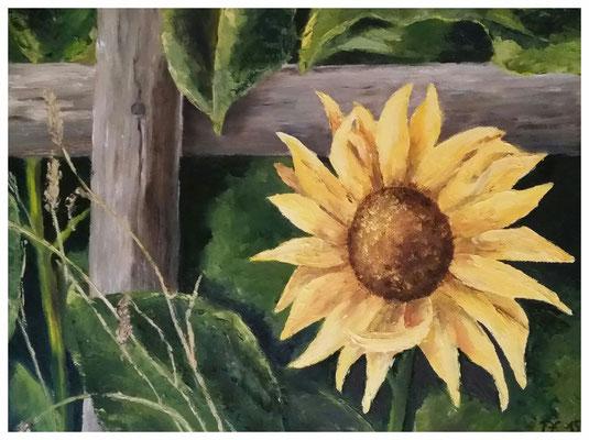 """Sonnenblume""  30 x 40 cm"