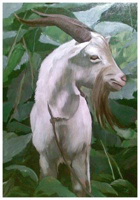 """""""Ziegenbock""""  50 x 70 cm (verkauft)"""