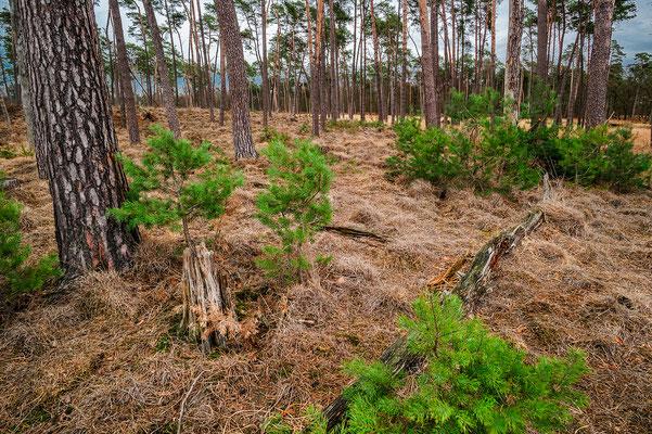 Diersfordter Wald Nordrhein-Westfalen