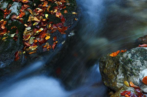 Creek in Trentino Italy