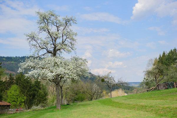 Obstwiese Odenwald  Nordrhein-Westfalen
