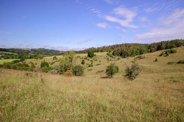 Dry meadow Nordrhein-Westfalen