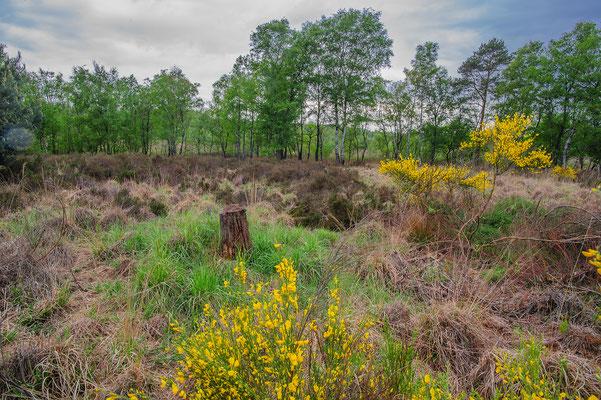 Vipera berus habitat Nordrhein-Westfalen Germany