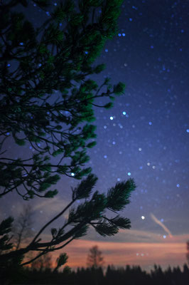Stars and Pinus mugo Baden-Württemberg Nationalpark Schwarzwald