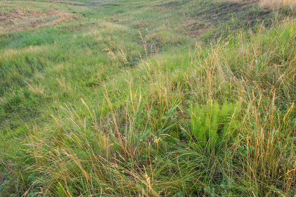 Meadow Romania