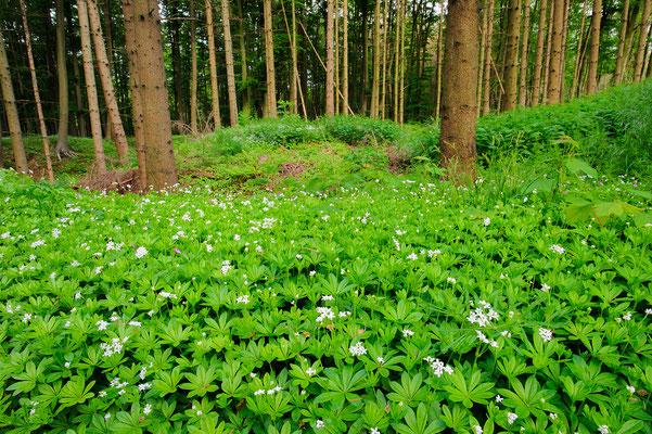 Bergeler Wald Nordrhein-Westfalen