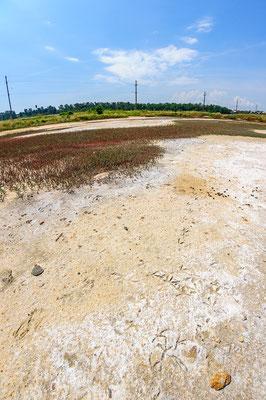 salt meadow