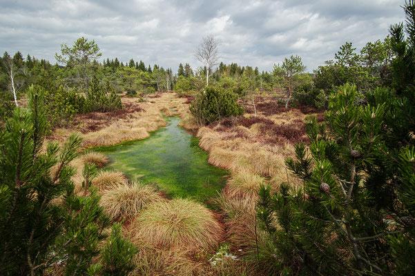 Vipera berus habitat Voralpen Bayern