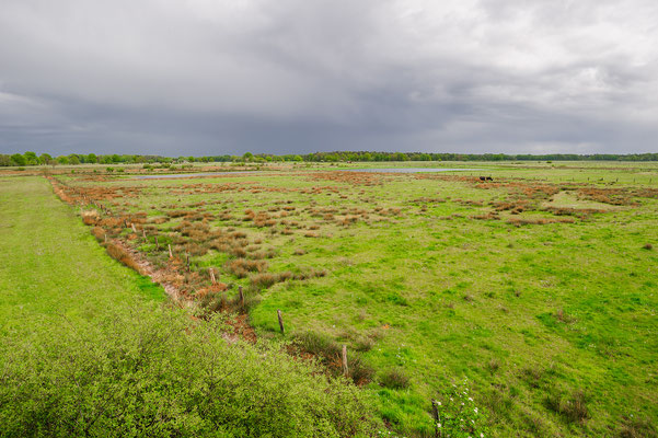 Dingender Heide Nordrhein-Westfalen