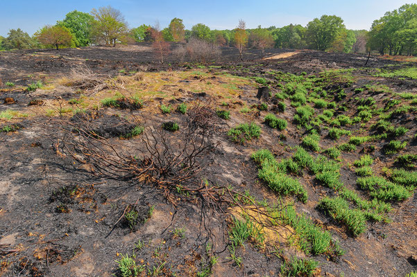 wildfire Meinweg Nationalpark / Bosbrand op de Meinweg / Waldbrand Nationalpark de Meinweg