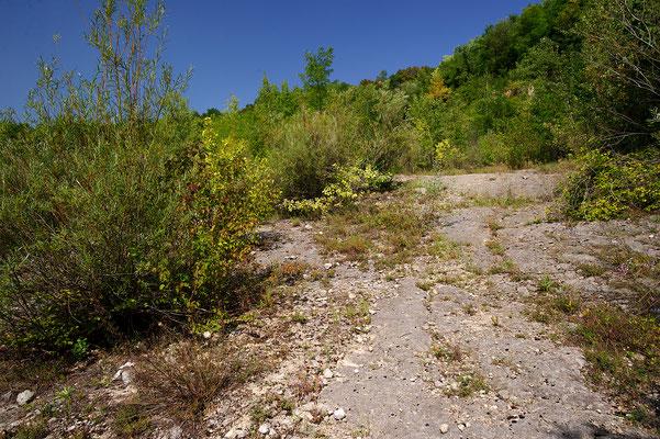 Vipera ammodytes ammodytes habitat