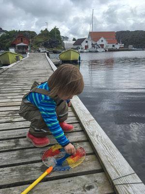 Am Bootssteg ist man immer schwer beschäftigt :-)