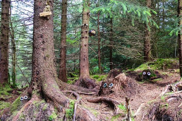 Der Wald hat Augen...