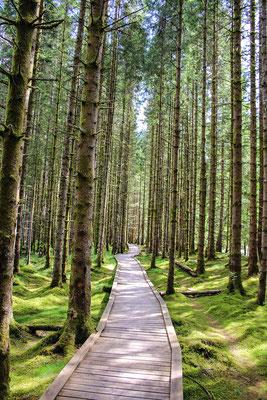 Wald der Moostrolle