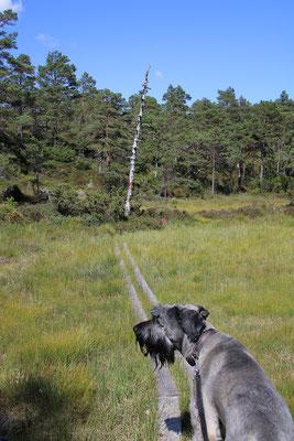 Der Weg zum Gipfel führt über schöne Wiesen...
