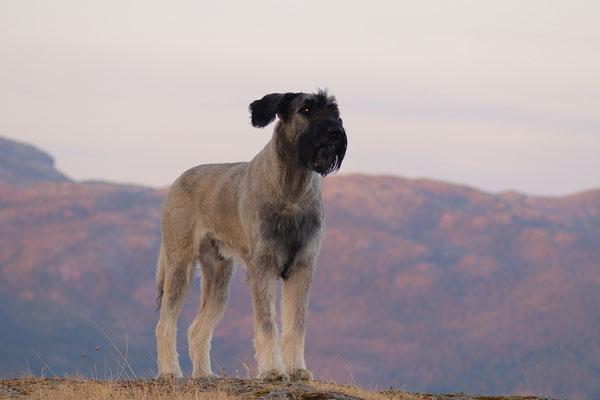 Unser Wachhund - immer aufmerksam :-)