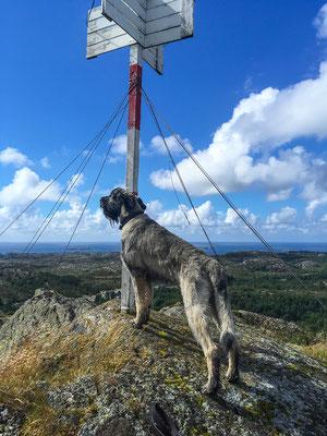Gipfel-Poser-Hund...