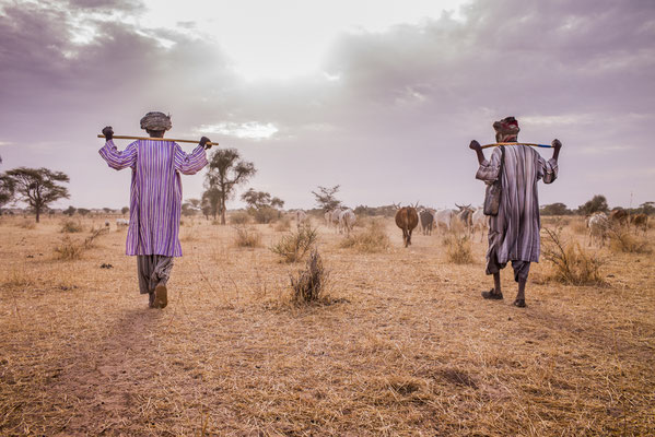 Dahra,  cow shepherd of the village, SOS Faim - Djolof, Senegal © François Struzik - simply human 2017