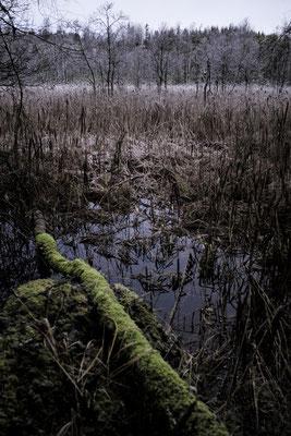Solvik, Dalsland, Sweden  © François Struzik - simply human 2019