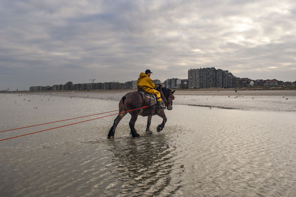 Horseback shrimp fishermen of the North Sea - Belgium- © François Struzik - simply human 2009