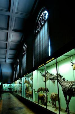 The Royal Museum of Central Africa in Tervuren (MRAC/KMMA) - © François Struzik - simply human 2009 - Belgium