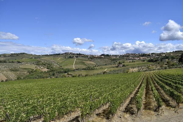 Weinberge Greve in Chianti