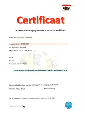 certification Bullmastiff Vereniging Nederland