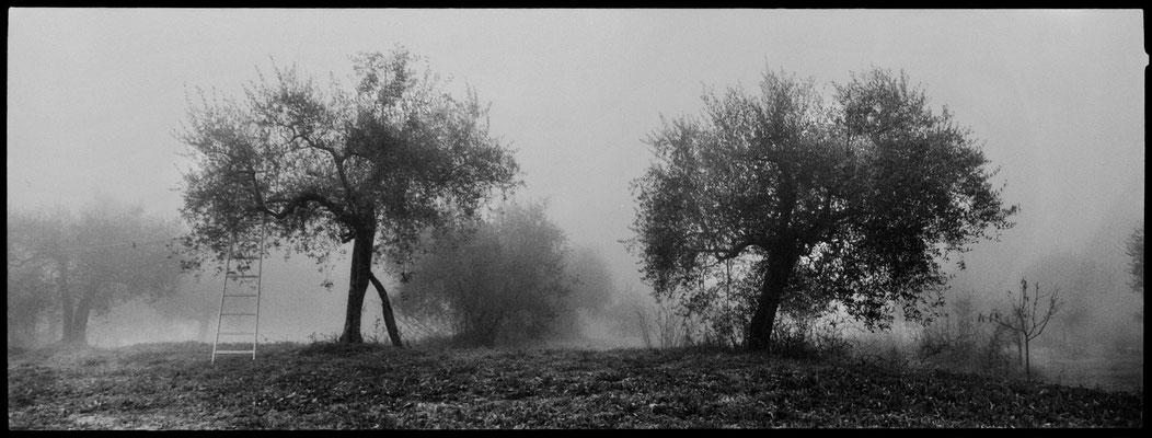 Daniele Vita - Tuscia 01 (2014)