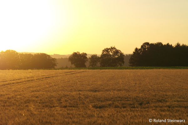 Sonnenaufgang über Gerstenfeld