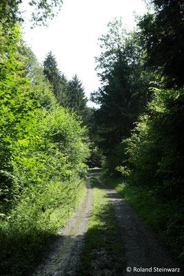 Waldweg im Irser Bachtal