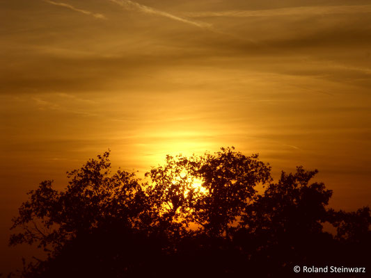 Untergehende Sonne hinter einer Eiche