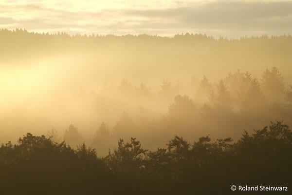 Morgennebel im Wohmbachtal