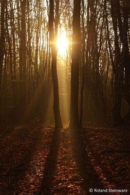 Morgensonne im November