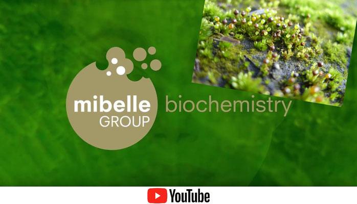 Der Schweizer Kosmetikkonzern Mibelle Biochemistry verwendet das Foto des Kleinen Blasenmützenmooses (Physcomitrella patens) für einen Werbefilm. Spezielle Inhaltsstoffe dieses seltenen Mooses werden in der Kosmetik genutzt.