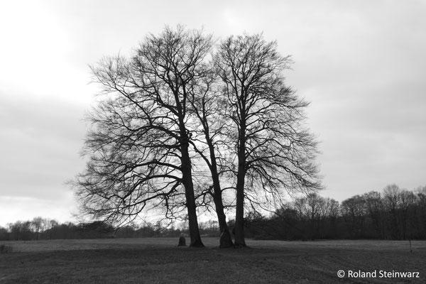 Baumgruppe in der Aggeraue