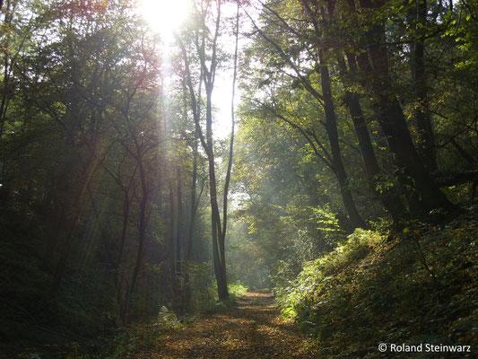 Lichtspiel im herbstlichen Limersbachtal