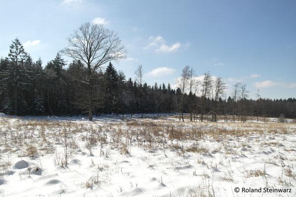 Leuscheider Heide im Winter