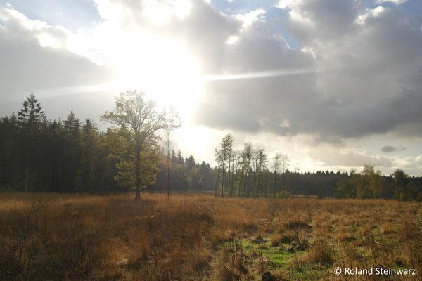 Leuscheider Heide