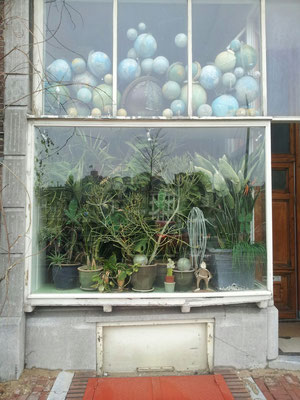 We love Globes! And we love Plants! Let's move in together!