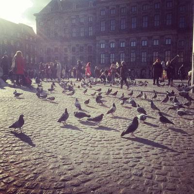 ... finden die Tauben auch.