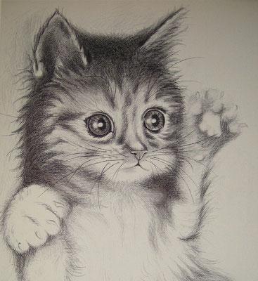 """""""Katze"""" - 2013, Kugelschreiber auf Leinen, 40x60 cm, verkauft"""