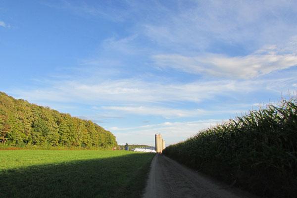 Champs à l'automne (Crédit photo: Claudette Morin)