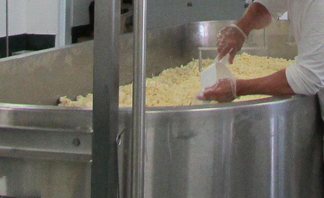 Ensachage du cheddar en grains