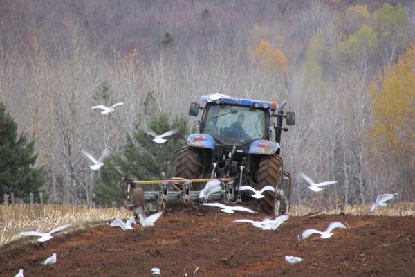Labourer les champs à l'automne ((Crédit photo: Claudette Morin)