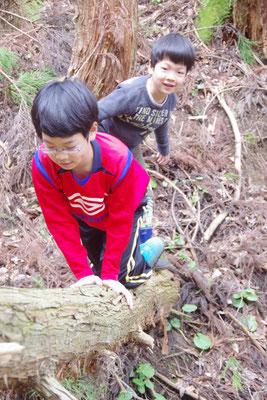 木登り? 倒れた木で遊ぶ